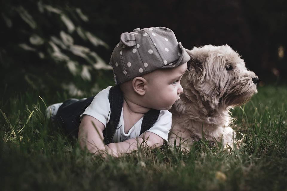 הקשר בין ילדים לבין ליטוף חיות