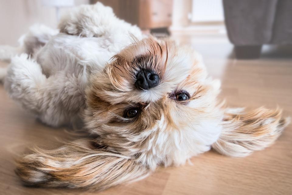 6 טיפים איכותיים למי שמגדל כלב