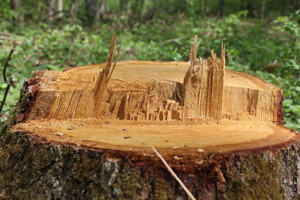 כריתת עצים בחצר – מידע